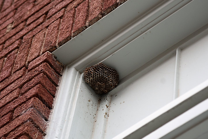 We provide a wasp nest removal service for domestic and commercial properties in Hockley.
